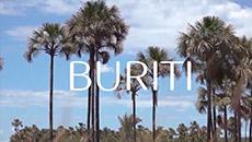 Ekos | Buriti | Protección solar