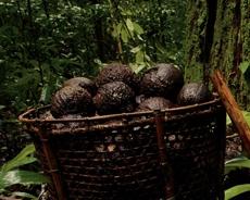 Cesto con frutos en la selva