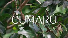 Ekos | Cumarú | Fragancia dulce